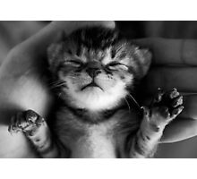 Precious Kitten Photographic Print