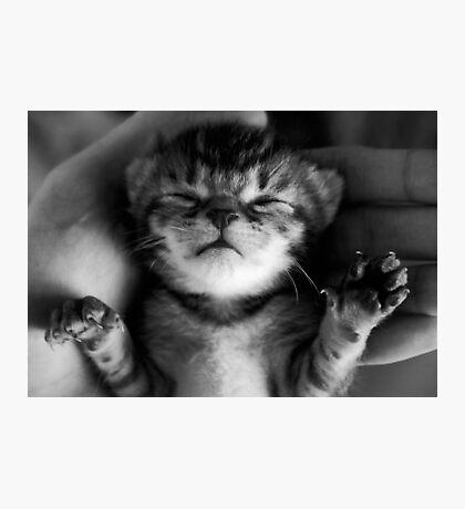 Precious Kitten Photographic Print