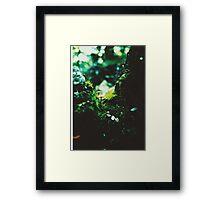 Forest Steps Framed Print