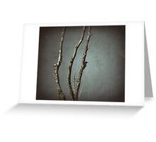 Nuttall's Woodpecker Greeting Card