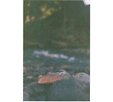 Hidden Paradise - a study - Pt V Photographic Print