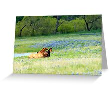 Horses & Bluebonnets Greeting Card