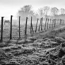 Equine Fence by Geoff Carpenter