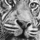 Mr. Tiger by artddicted