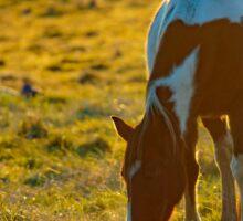 Backlit Horse Sticker