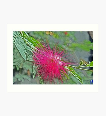 Spiky Jungle Flower Art Print