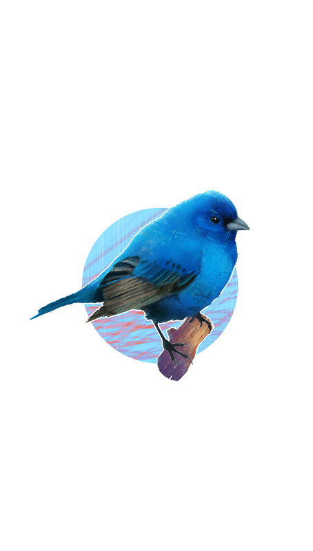 bird by jeffrey0410