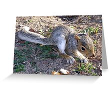 Nutty the Squirrel Strikes Again Greeting Card