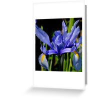 Iris Wears Her Blue  Gown Greeting Card