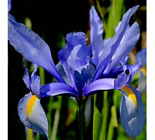 Iris Wears Her Blue  Gown Photographic Print