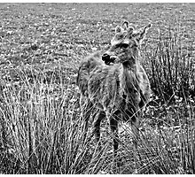 Fawn (4) Photographic Print