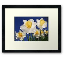 The Daffs Are Back In Town Framed Print