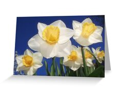 The Daffs Are Back In Town Greeting Card