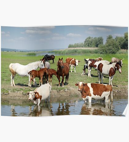 farm animals on river Poster
