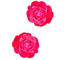 Two pink roses Photographic Print