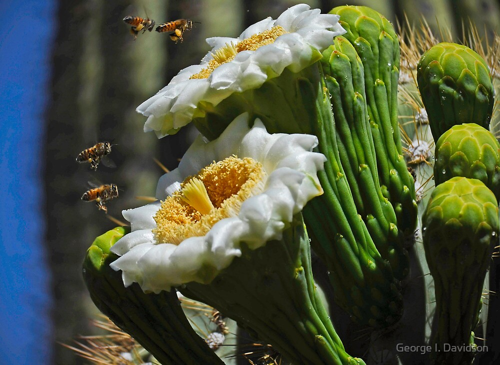 Happy Honey Bees by George I. Davidson
