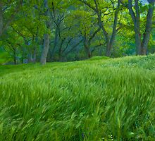 Tall Grass at Twilight by marccrumpler