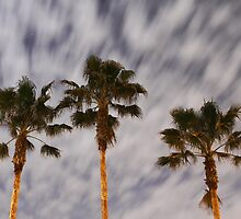 Florida Night, 25 Seconds by Carol Bailey White