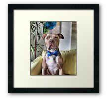 OBEY the Flaps of Destiny! Framed Print