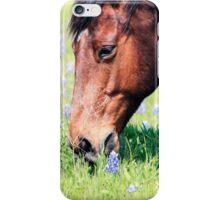 Horse & Bluebonnets iPhone Case/Skin