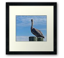 A Funny Bird Is The Pelican......... Framed Print