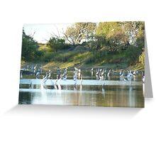 Birds in Coopers Creek, Windorah Greeting Card