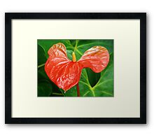 ANTHURIUM FLOWER CAPTURE Framed Print
