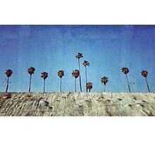 Bluff Palms Photographic Print