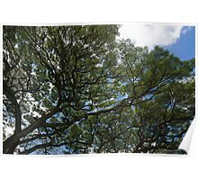 The Intricate Natural Canopy Poster