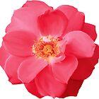 RED ROSE by Maria Mazhirina