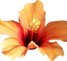 ORANGE FLOWER by Olga Chetverikova