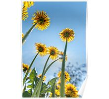 Spring, flowers, sun and sky! Poster