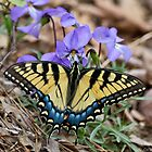 Female Eastern Tiger Swallowtail Butterfly on Violets by Lee Hiller