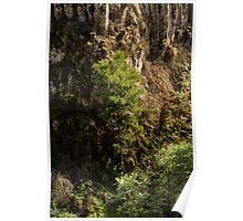 Growing Up At Trentham Falls Poster