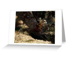 Tongue Shrimp MKII :P Greeting Card