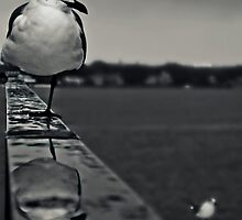 Reflecting by bostonrache