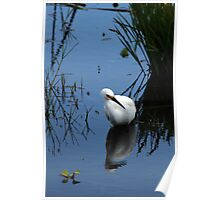 Snowy Egret Standing in Water Poster