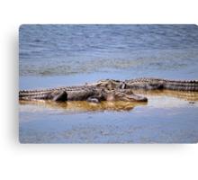 Gators Napping Canvas Print