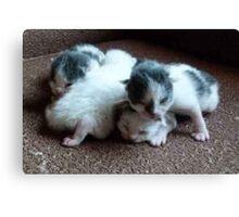 4 Little Kittens  5 days old Canvas Print