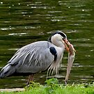 Herron Snacking  by Sparowsong