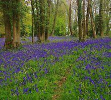 Bluebell Wood by lezvee