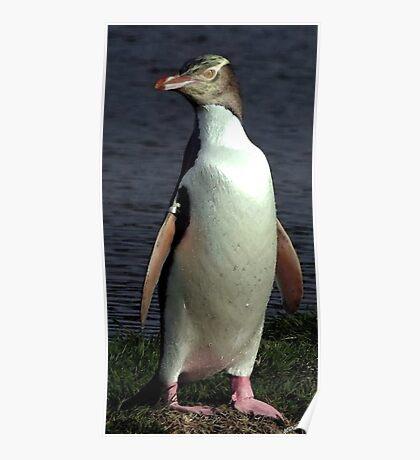 Yellow Eyed Penguin Bird Portrait Poster