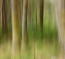 Impressions of a wood by Mandy Elizabeth  Rush