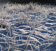 Moonscape in Frost by Mandy Elizabeth  Rush