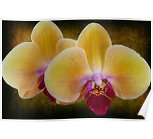 Golden Yellow Orchids Poster