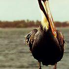 Pelican by bostonrache
