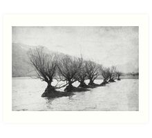 Willow Trees Art Print
