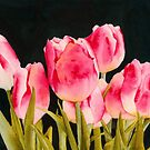 Spring Tulips by Ken Powers