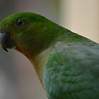 Mrs King Parrot by candysfamily