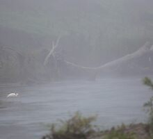 Mist Over The Brisbane River by Steve Bass